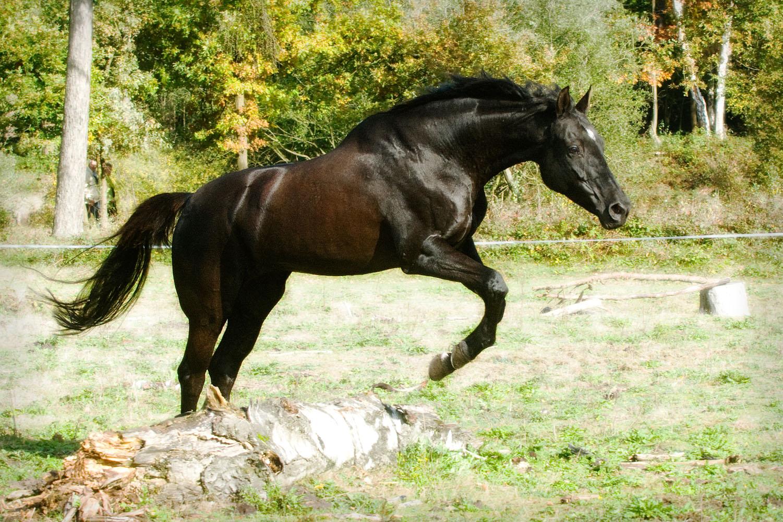 Niestadt-Fotografie-Schoonhoven-paarden-shoot-op-de-heide-in-Horst-1