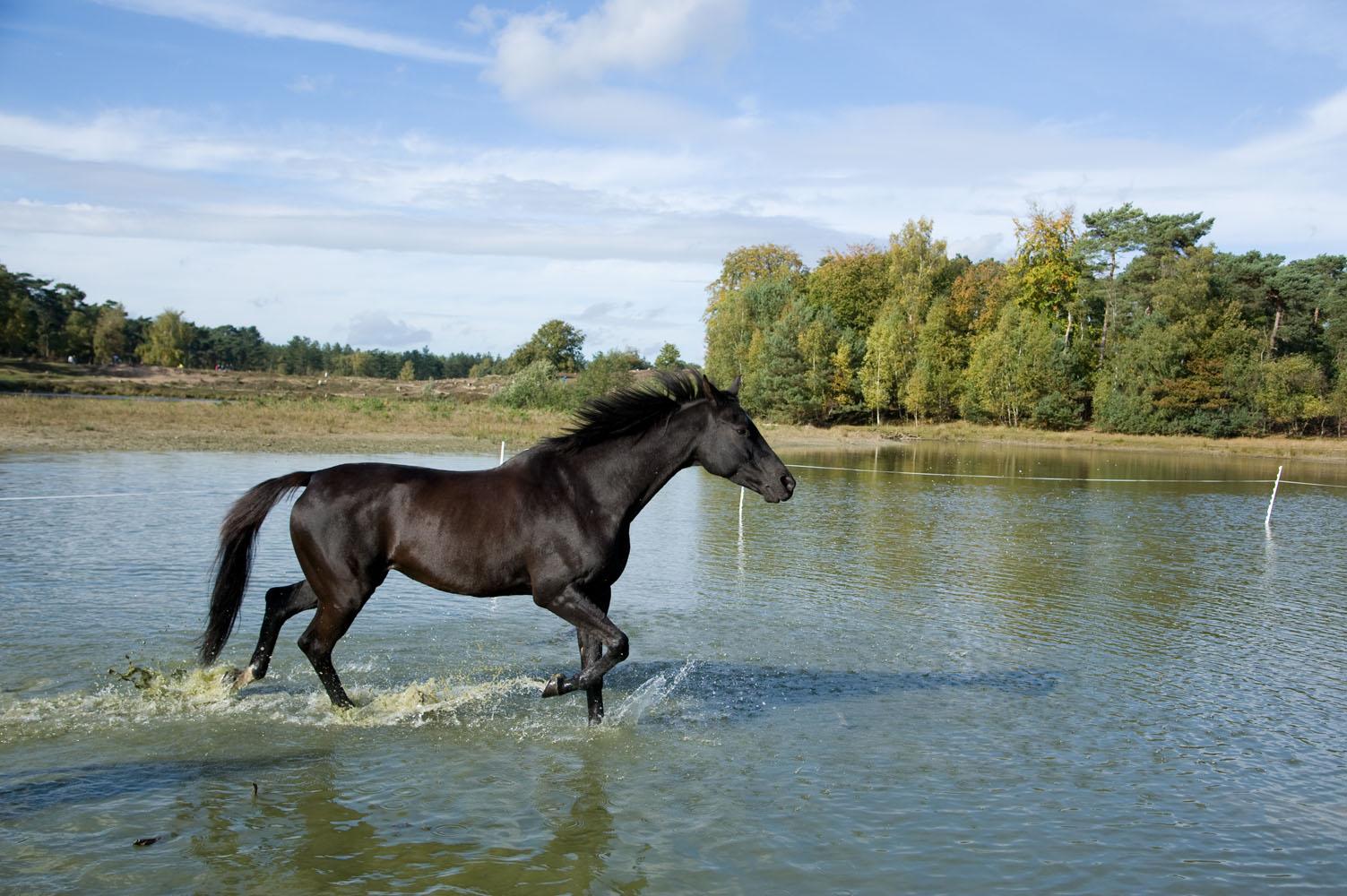 Niestadt-Fotografie-Schoonhoven-paarden-shoot-op-de-heide-in-Horst-4