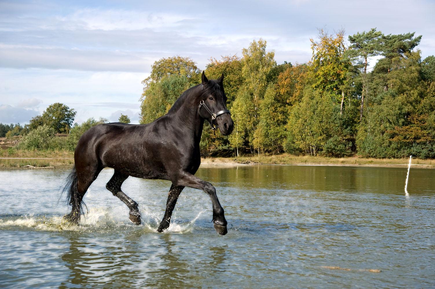 Niestadt-Fotografie-Schoonhoven-paarden-shoot-op-de-heide-in-Horst-7