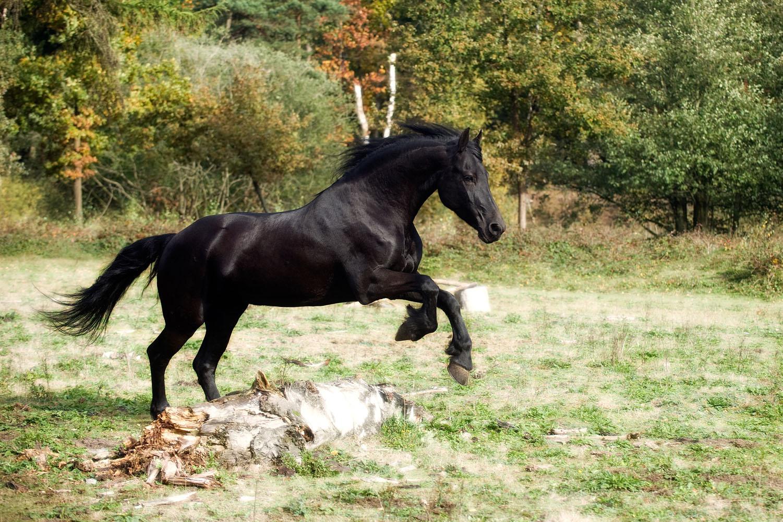 Niestadt-Fotografie-Schoonhoven-paarden-shoot-op-de-heide-in-Horst-8