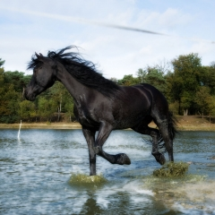 Niestadt-Fotografie-Schoonhoven-paarden-shoot-op-de-heide-in-Horst-2