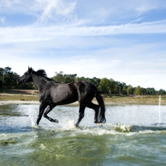 Niestadt-Fotografie-Schoonhoven-paarden-shoot-op-de-heide-in-Horst-6