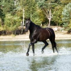 Niestadt-Fotografie-Schoonhoven-paarden-shoot-op-de-heide-in-Horst-9