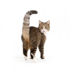 Niestadt-Fotografie-Schoonhoven-studio-shoot-met-een-kat