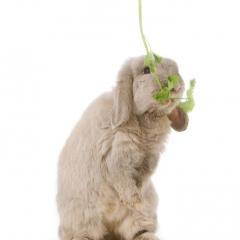 Niestadt-Fotografie-Schoonhoven-studio-shoot-met-een-konijn-op-achterpoten