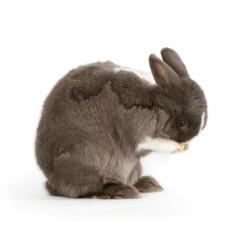 Niestadt-Fotografie-Schoonhoven-studio-shoot-met-een-konijn
